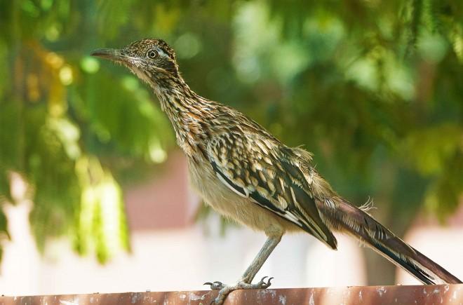 Birdwatching-92
