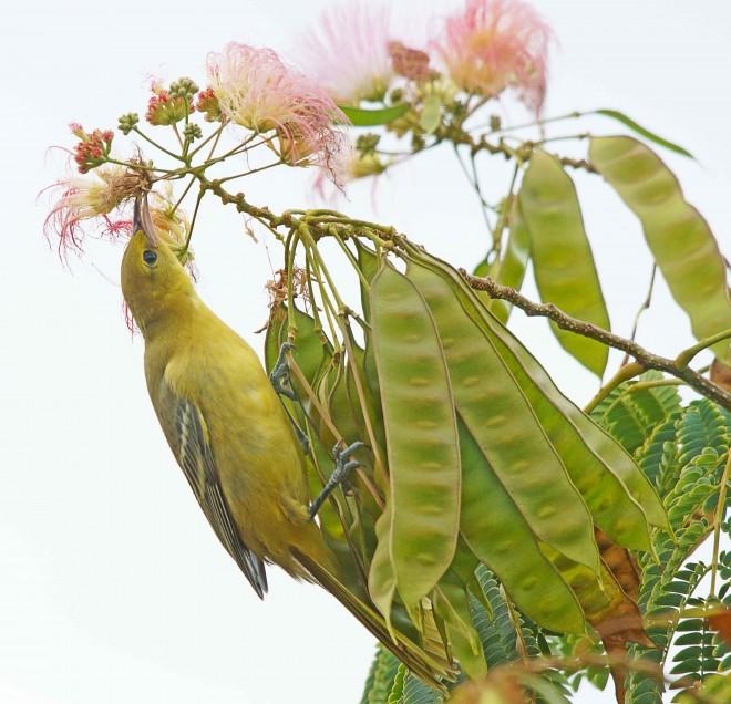 Birdwatching-93