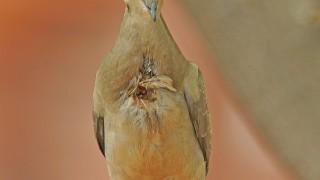 Birdwatching-95