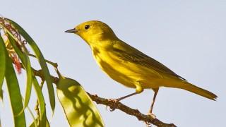 Birdwatching-96