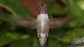 Birdwatching-98