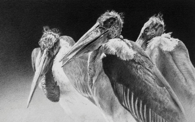On display: birds interpreted by the world's best artists
