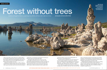Mono Lake: Forest without trees