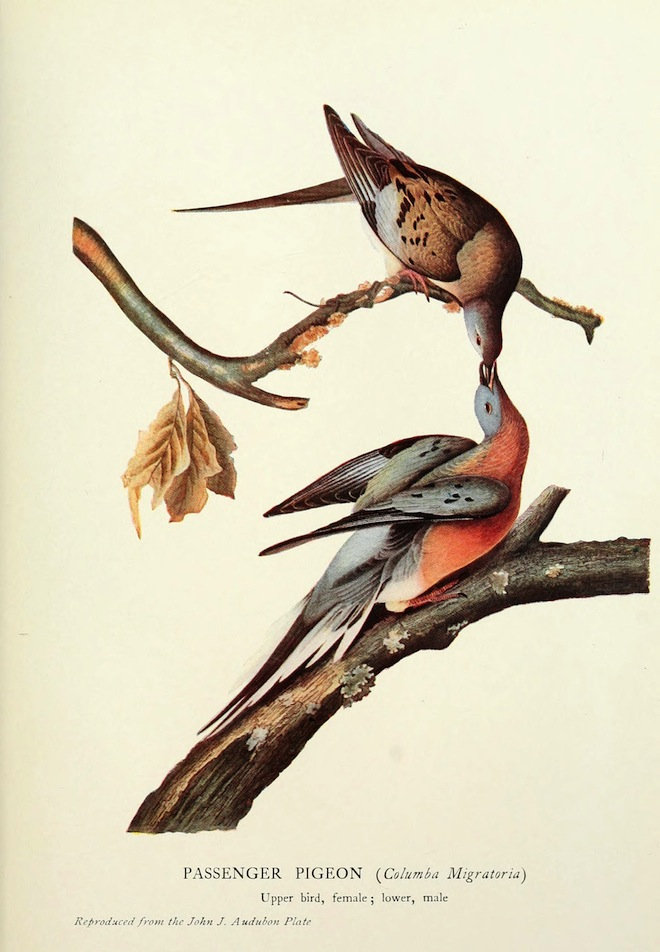 99 years without a Passenger Pigeon