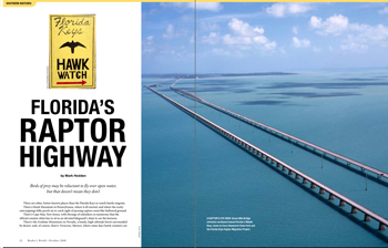 Florida's raptor highway