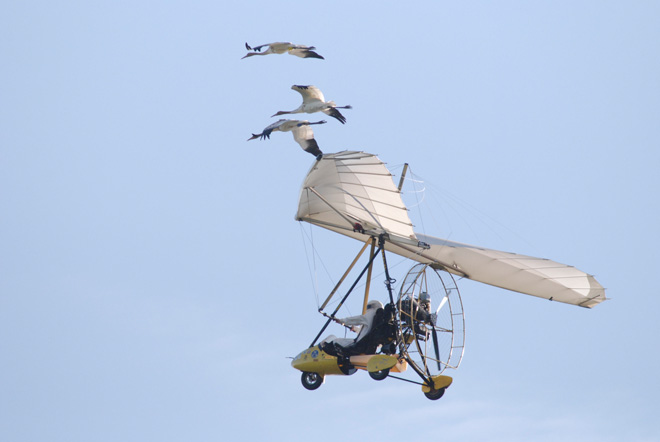 A weekend for watching and celebrating Whooping Cranes