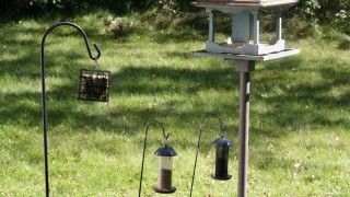 no birds at feeders