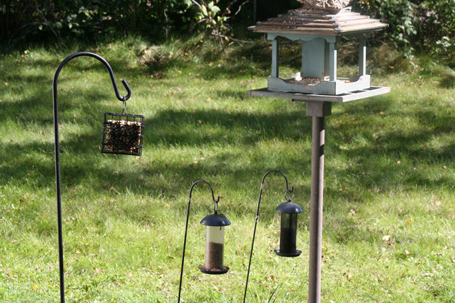 Julie Craves explains why birds sometimes abandon feeders