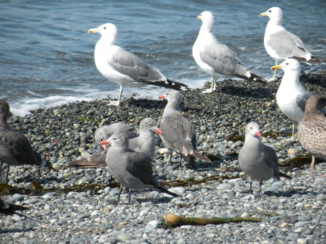 8-23-2013-birds-041