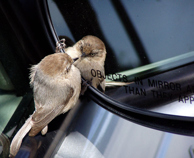A stroll across a parking lot produces two birds for the price of one
