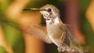 Birdwatching-105
