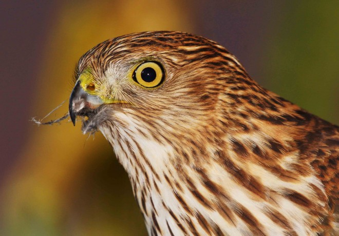 Birdwatching-109