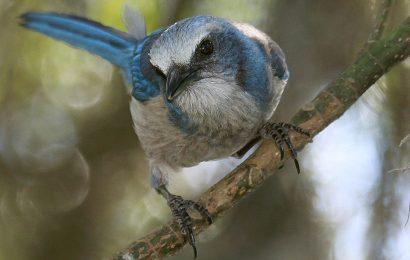 Birding festivals scheduled for February 2019