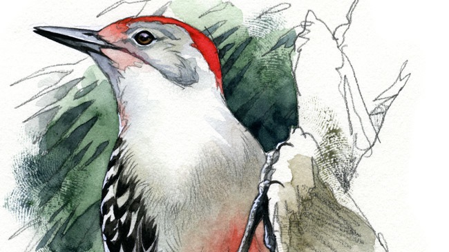 Citizen scientists: Join the action at Project FeederWatch