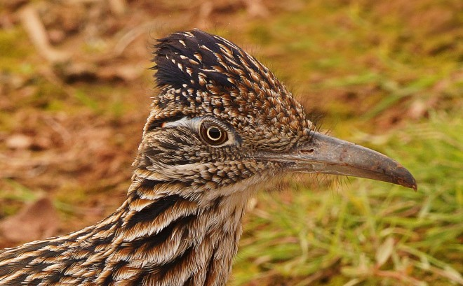 Birdwatching-115
