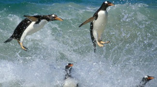 Penguins and spectacular birds-of-paradise star in big new photography books