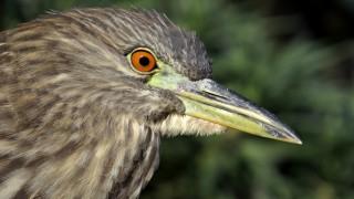 birdwatchingheron1