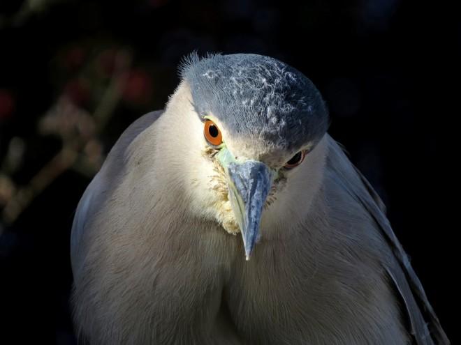birdwatchingmagazine2
