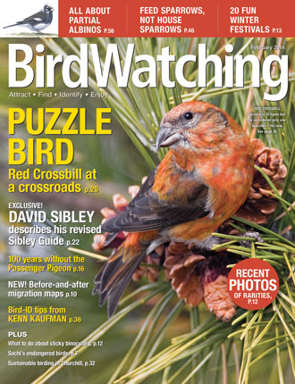 Sibley, the Passenger Pigeon, and Red Crossbills star in our February 2014 issue, on newsstands now