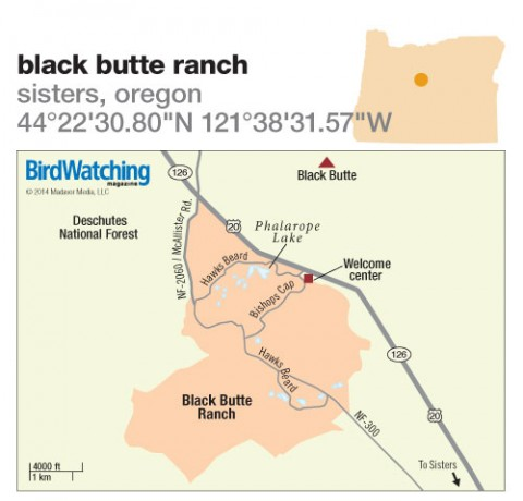 179. Black Butte Ranch, Sisters, Oregon - BirdWatching