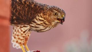 Birdwatching-110