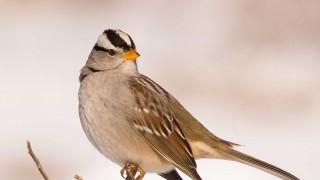 Birdwatching-122