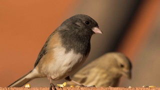 Birdwatching-139