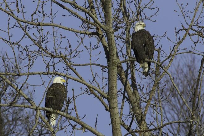 eagles-1