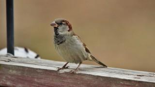 house-sparrow-2-1440x960