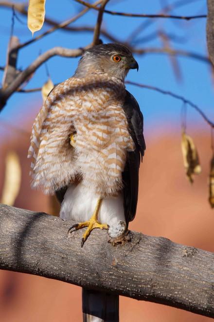 Birdwatching-140