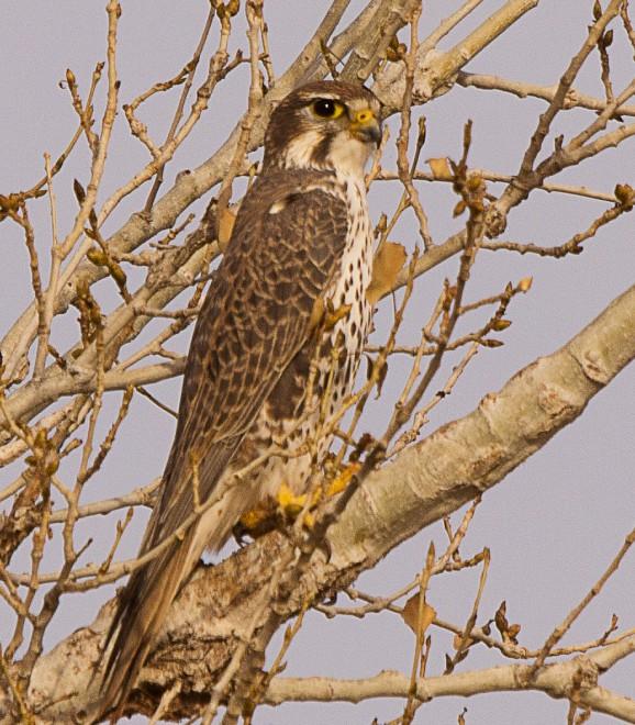 Birdwatching-145
