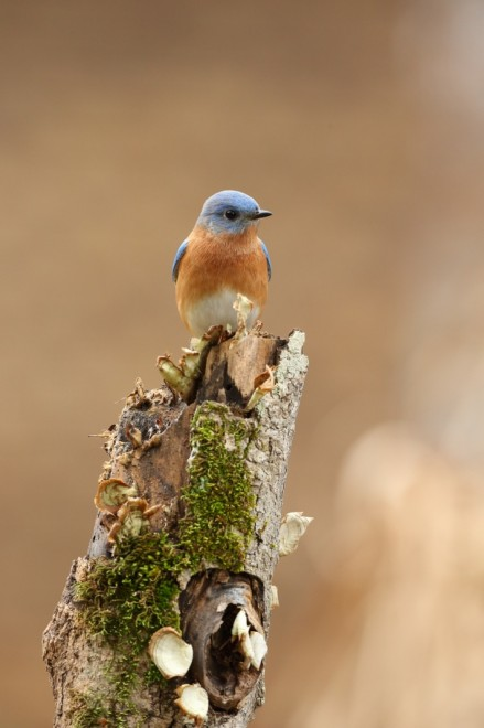 Bluebird-on-New-Years-Day