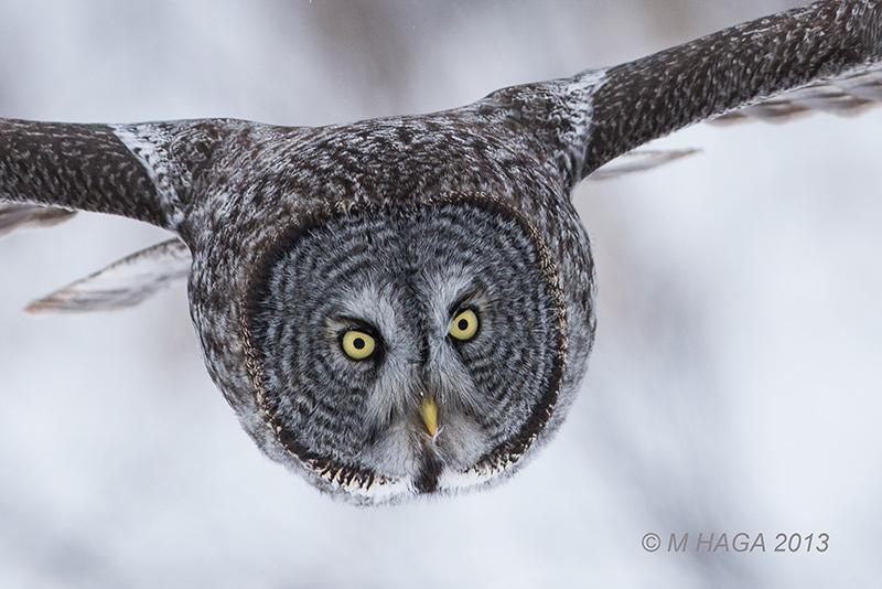 Wild Places, Wild Birds cover image