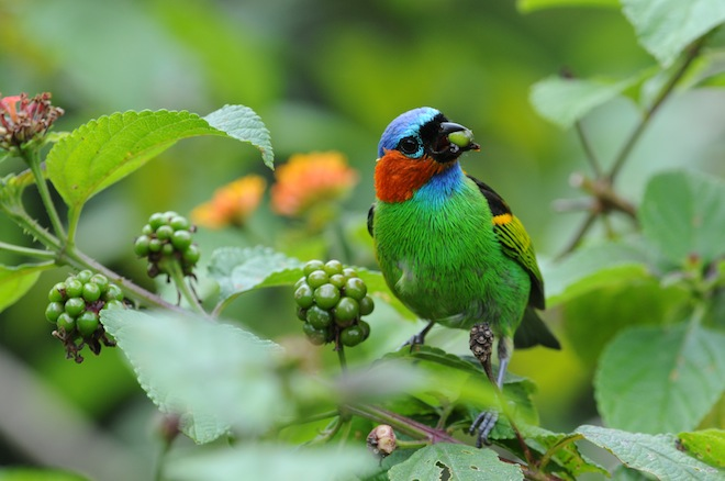 Eye on conservation: Valuable land added to species-rich reserve in Brazil