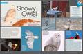 Special: Snowy Owls