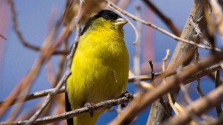 Birdwatching-159