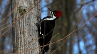 woodpecker-signed