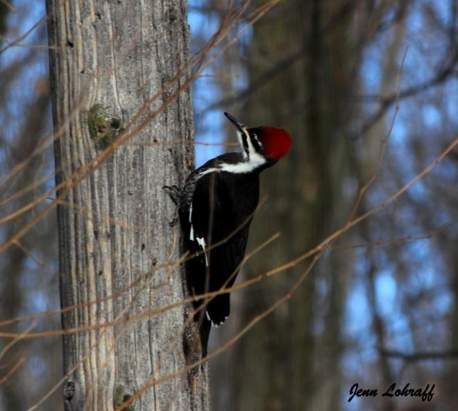 woodpecker-signed