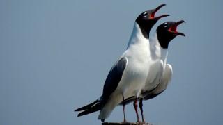 5950a-Seagulls-at-Brunswick-GA