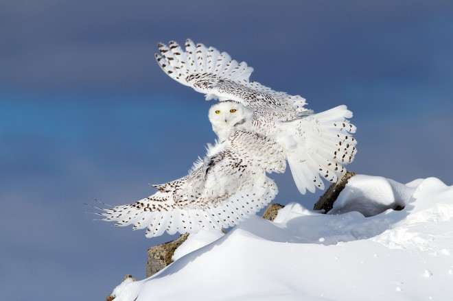 Air-Snowy2
