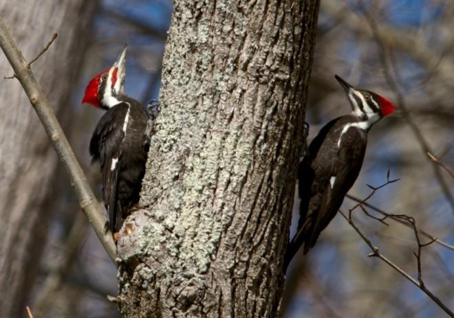 Birding-March-3469