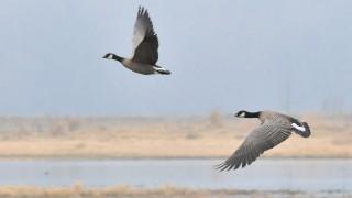 DSC_8097-BirdWatching
