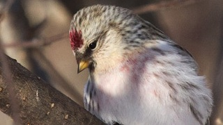 Why finches might not eat the Nyjer seed you provide