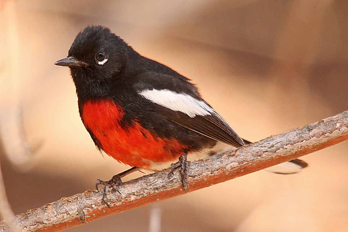 Birdwatchers' 15 favorite birding destinations in the U.S. and Canada