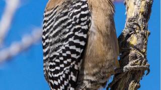 Birdwatching-166