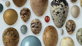 Book of Eggs_320x180