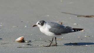 Fort DeSoto - Birds