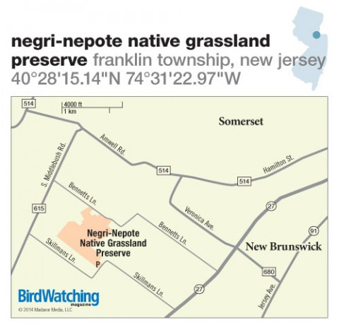 188. Negri-Nepote Native Grassland Preserve, Franklin Township, New Jersey
