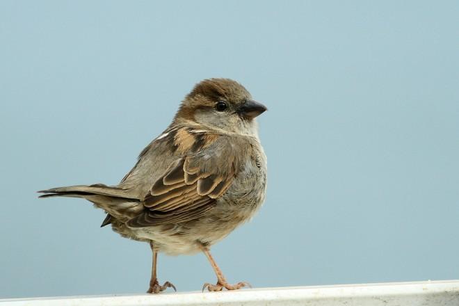 Sparrow-House-2014-04-27-055