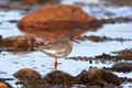 Birding Briefs